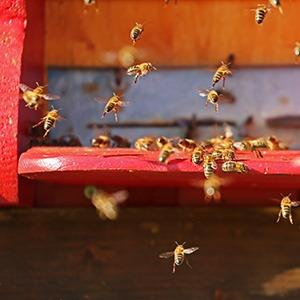 Méhész OKJ tanfolyam képzés